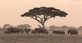 Fototapete Herd - Amboseli - Säugetiere