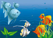 Colorful see fish in coral reefs swimming in blue ocean water