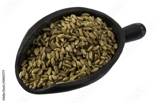 scoop of spelt wheat berries