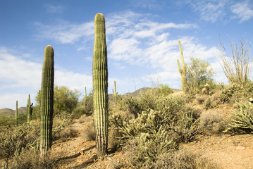 Arizona desert hiking trail