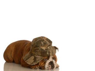 bulldog with sad bored expression wearing cute hat