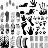 Fototapety A collection of Vector Fingerprints, Footprints and more