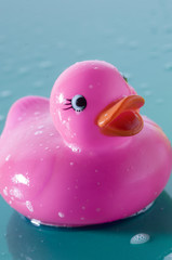 Pink rubber duck, close-up
