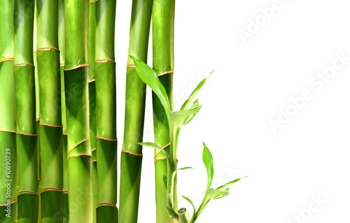 Bamboo shoots stacked in a row on white