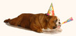bulldog wearing birthday hat and blowing on horn