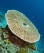 Underwater locator