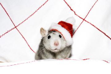 the christmas rat
