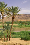 Oasis Tamnougalt in Draa Valley, Morocco
