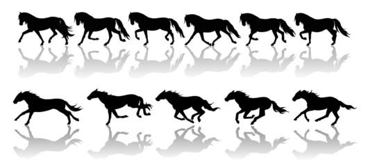 andature del cavallo