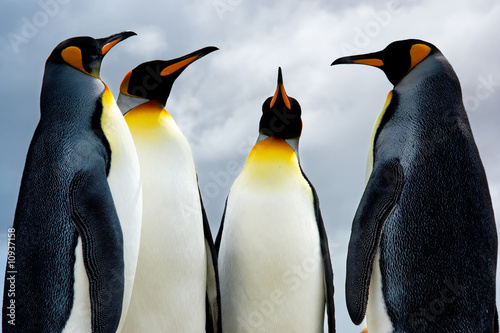 4 King Penguins