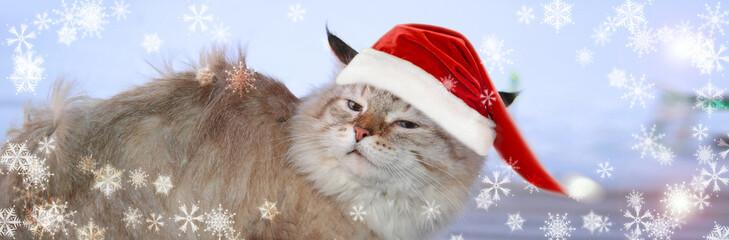 Christmas banner, cat santa