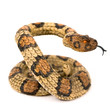 Wooden snake