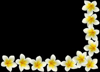 coin de fleurs blanches de frangipanier sur fond noir
