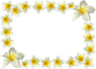 bordure de fleurs blanches de frangipanier