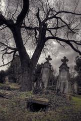 halloween scene with opened tomb