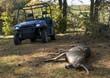 Deer with UTV - 10976363