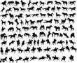 100 vector silhouettes of horses - 10998163