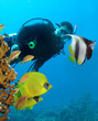 Diver and butterflyfishes