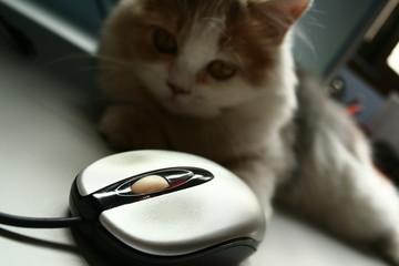 gato y ratón6