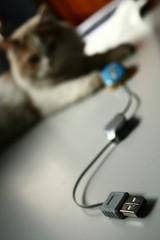 gato y ratón5