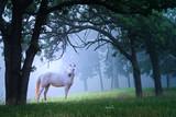 Cal în Woods Dimineaţa Foggy