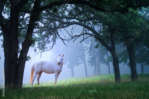 Poster Paarden Horse in Foggy Morning Woods