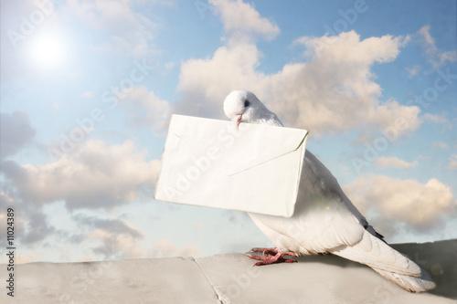 Leinwanddruck Bild White dove with letter