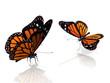 Quadro les papillons