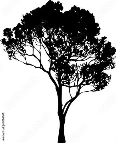 Tree Silhouette - 11074567