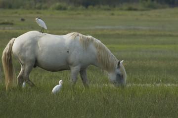 Cavallo con aironi