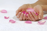 Fototapety Beautiful hands with rose petals