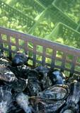 Fototapety huîtres