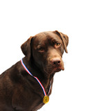 prize winning dog poster