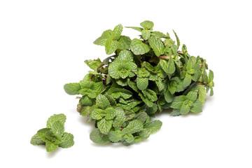 Fresh green mint leaves on white