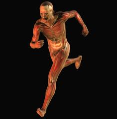 muscoli 5