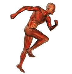 muscoli 7