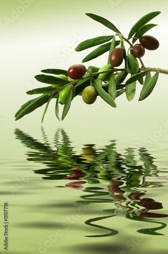 Zielona gałązka oliwna
