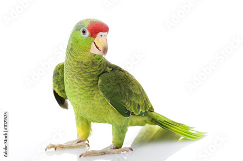 Fotobehang Papegaai Mexican Red-headed Amazon Parrot