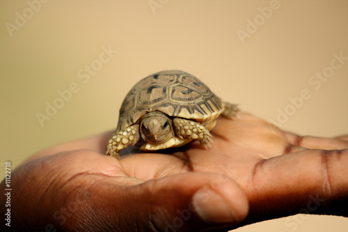 Educational Tortoise