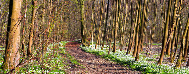 A photo of a Danish forest in early springtime