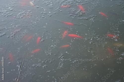 Fischteich im winter 1 von ginkgo lizenzfreies foto for Fischteich im winter