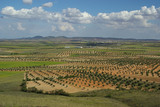 Olivenhain - olive grove 09 poster