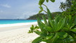 Green Leafs on White Sand