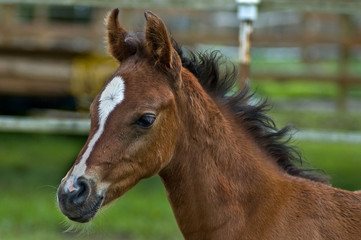 Baby foal in profile