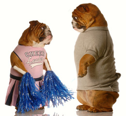 two bulldogs dressed up as a cheerleader and a jock