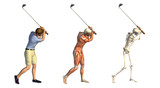 Anatomical Overlays: Golf Swing poster
