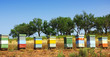 Colored bee-houses in a field of Portugal.