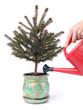 Ecologic xmas tree