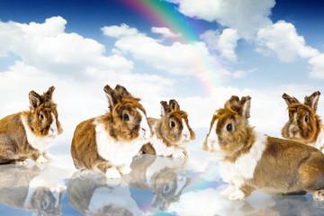 Rabbits Paradise