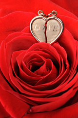 gold heart in a red rose